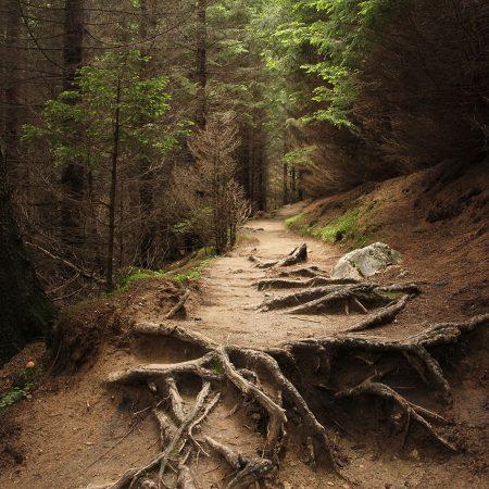 woodland managment