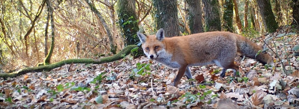 Choosing a woodland for Wildlife