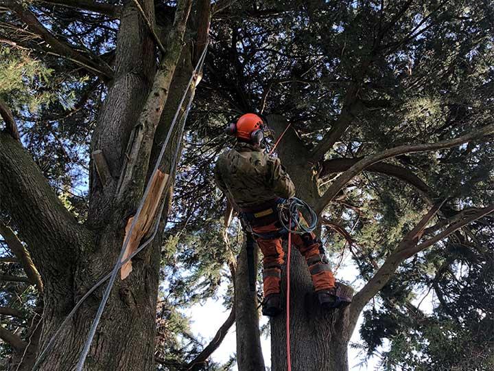tree-surgery