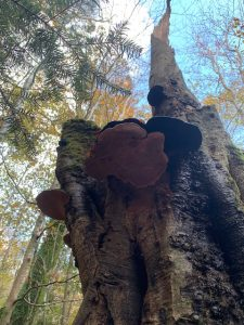 Woodland Management - Ancient Woodland