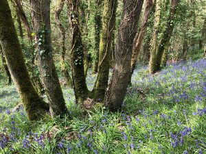 Woodland Management - Oak Coppice