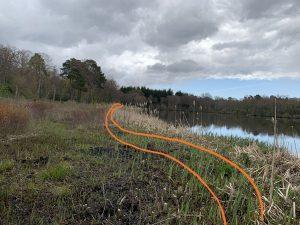 Crassula helmsii behind reeds