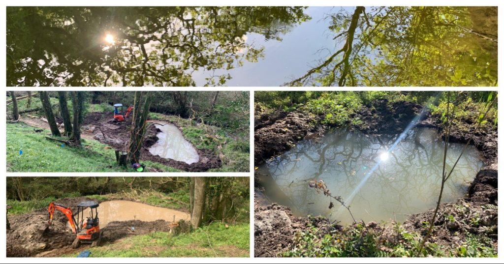 Woodland Pond Complex